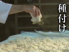 米麹を造るには